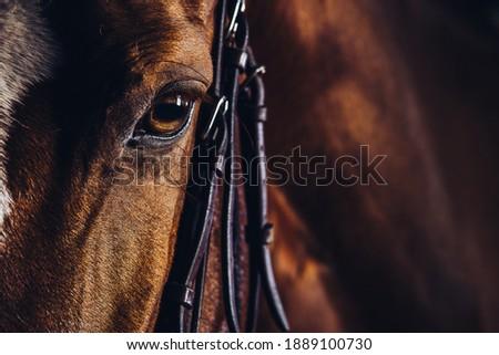 Close up portrait of horse. Photo stock ©