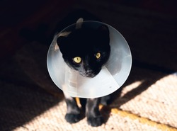 Close up portrait of small black cat injured with funnel cone collar small sad cat injured with green eyes