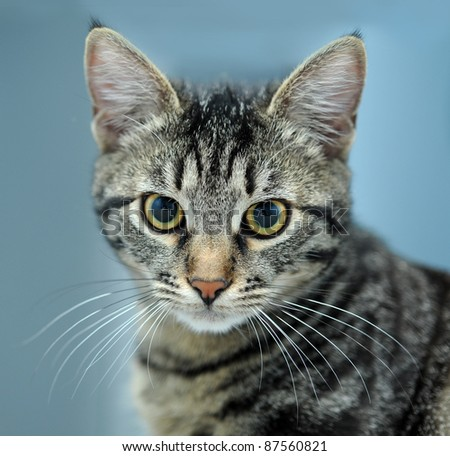 close-up portrait of striped cat isolated