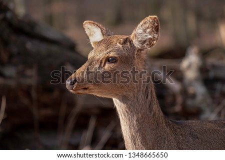 Close up portrait of young roe deer. #1348665650
