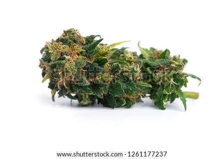 Close up  prescription and recreational medical marijuana flower bud isolated on white background