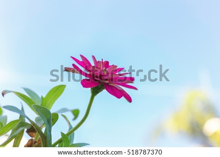 stock photo close up purple flowers in the garden background flower cute flowers amazing and beautiful flower 518787370 - Каталог — Фотообои «Цветы»