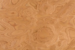 Close up real walnut burl wood grain texture background. Extremely high resolution photo.