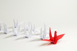 Close up red bird leading among white, Leadership concept