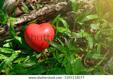 Close up red heart symbol on the grass beside the root of trees. Concept of love nature or natural conservation is using for promoting save the green earth.  Saving environment flat lay. #1505118077