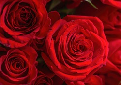 Close up Red roses background. Natural texture and patten background. Floral background.