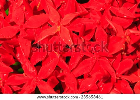 Close-up red spike flower background #235658461