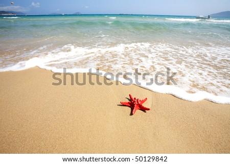 close up red starfish on beach