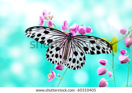 Close up Rice Paper Butterfly on pink flower #60310405