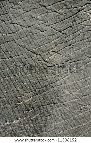 close up rough texture of an elephant's body