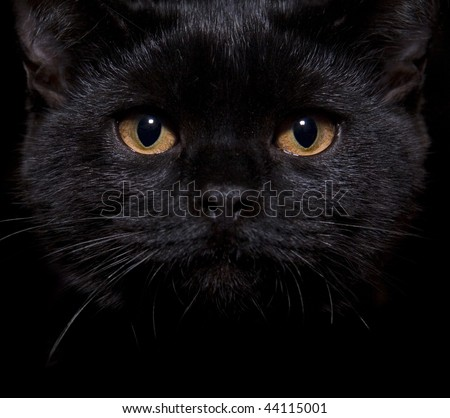 Close-up shot of a black cat with orange eyes