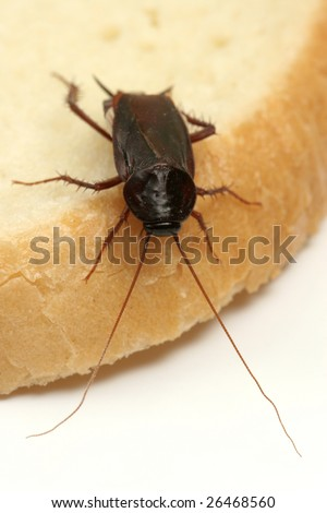 Close up shot of a cockroach on a slice of bread