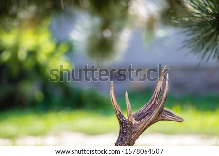 Close up shot of a deer antlers, selective focus, blurred background #1578064507
