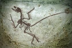 Close-up shot of a dinosaur fossil.