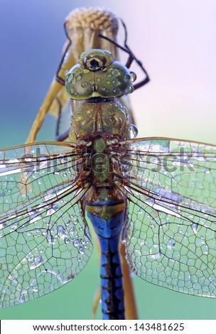 Close-up shot of a dragonfly with dew drops