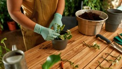 Close-up shot of a girl who working as a gardener. Home garden concept. Girl in gloves planting a plant in a pot of black earth. Garden worker table with tools