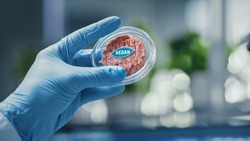 Close up Shot of a Lab-Grown Cultured Vegan Meat Sample Held by the Scientist in Blue Glove. Medical Scientist Working on Plant-Based Beef Substitute for Vegetarians in Modern Food Science Laboratory.