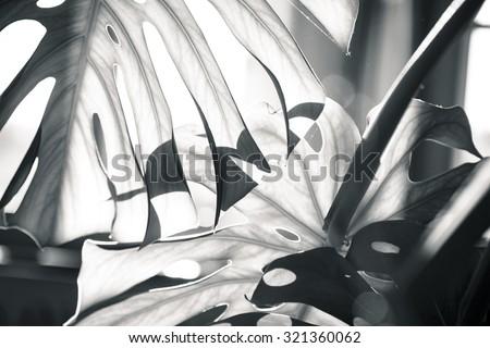 close up shot of a palm tree leaf Zdjęcia stock ©