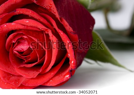 Close-up shot of a red rose bud with water drops on petals