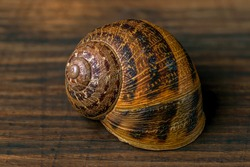 Close-up shot of a snail on a wooden surface, the same color as the shell
