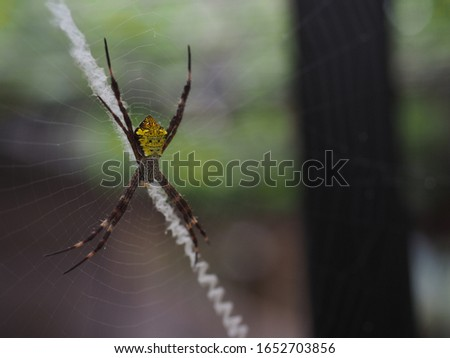 Close up shot of a Spider (laba-laba) in spider's web, waiting for its prey. Photo taken in Indonesia. Space for text Stock foto ©
