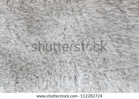 close-up shot of abstract fur bachground (texture)