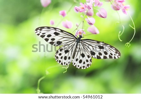 close up shot of beautiful butterfly with natural green background