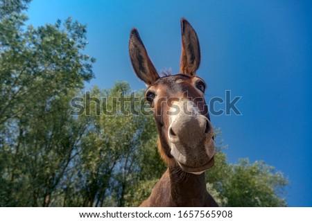 Photo of  Close up shot of donkey head