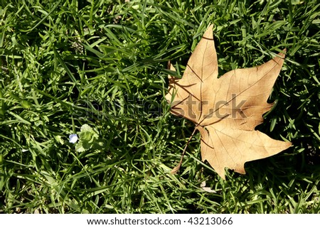 close up shot of dried fallen leave on the ground