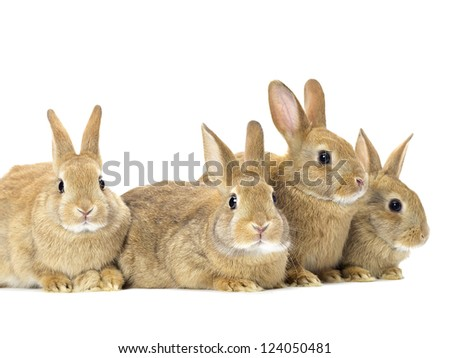 Close-up shot of easter bunnies isolated on white background