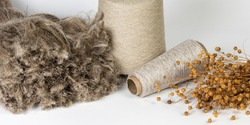 Close-up shot of flax fiber with evenly wound bobbins and a bouquet of dry flax on a white background.