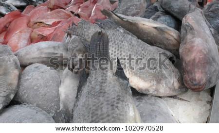 Close up shot of frozen fish. #1020970528