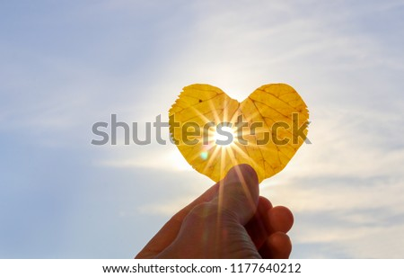 Close up shot of hand holding yellow leaf of heart shape with sun rays shining through it at light blue sky background. I love autumn concept. Copy space #1177640212