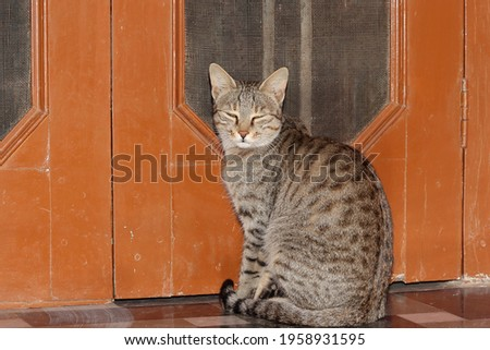Close-up shot of Pet Tabby cat sitting near the door of the house looking at the camera. concept to portrait Tabby cat , Pet Tabby cat , Tabby cat face , cats pose. Stock photo ©