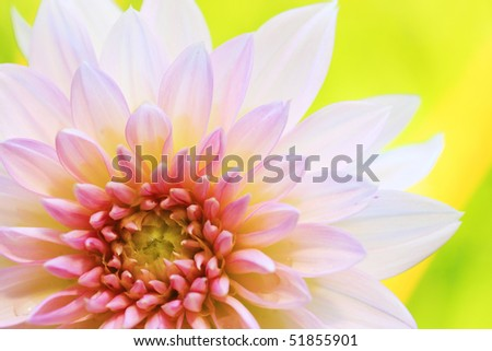 Close-up shot of pink gerbera with green leaf as background.
