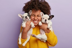 Close up shot of pleased woman with Afro hair holds two puppies, spends leisure time with loyal animal friends, happy to have newborn french bulldog dogs, isolated on purple wall. Animals, people
