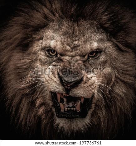 Close-up shot of roaring lion #197736761