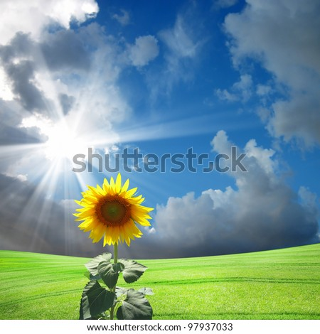 close up shot of sunflower over clear sky