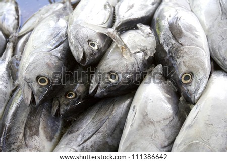 Close up shot of the display of fish on the market