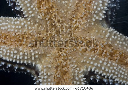 Close up shot of the underside of a starfish.