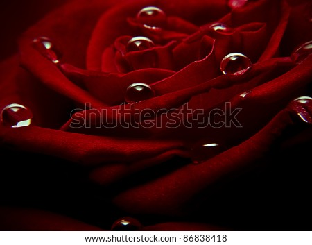 close up shot of water drops on a red rose