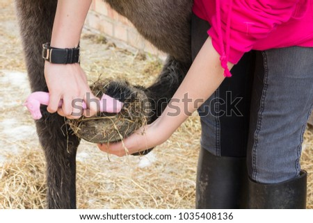 Close up shot of young womans hand holding hoof pick as she cleans out the hoof of her horse ready to ride.