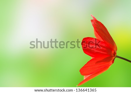 Close up side view of a bright red tulip reaching in from right of frame, against a bokeh background created from the spring flowers and grass that were behind the tulip when it was shot.