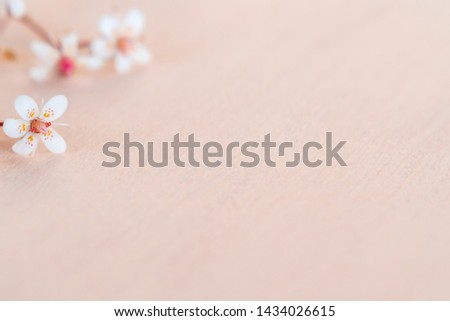 Close up small white flowers on a wooden coral background with space for text - beautiful floral background