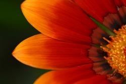 close up soft flower