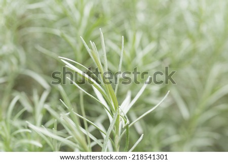 Close up Spanish Moss in soft color and blur style for background