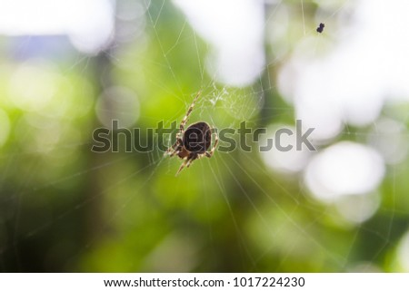 Close up spider on the web or spider web on green background for concept design, Beautiful stripe on spider and web in the nature for decoration