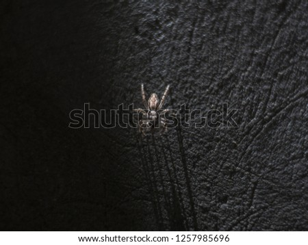 close up spider picture with shadow on the wall