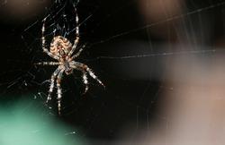 Close-up spider with cobwebs on dark background