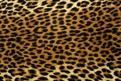 Close up spots pattern of a leopard